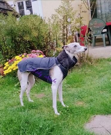 Réalisation d un manteau pour chien